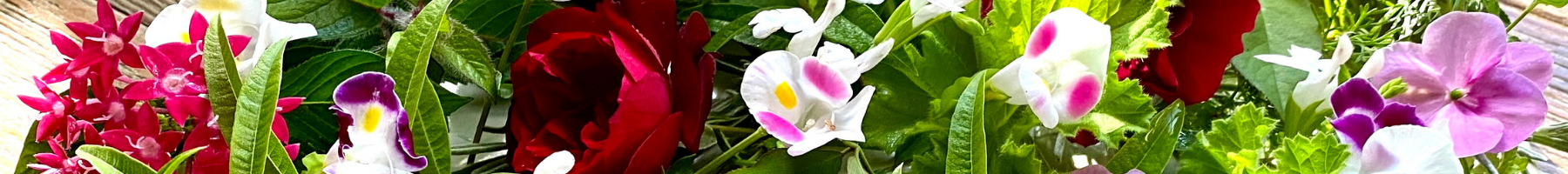 sakiwai(さきわい)について - カフェや飲食店におすすめ 食用花(エディブルフラワー)のある無農薬カフェ カフェ&グリーンれんげハウス