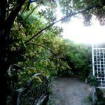 夕暮れの庭