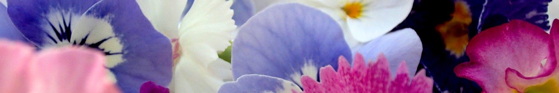 お問い合わせ - カフェや飲食店におすすめ 食用花(エディブルフラワー)のある無農薬カフェ カフェ&グリーンれんげハウス