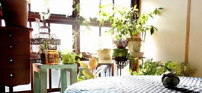 sakiwai ルームコロン 薫習kunju・プラーナはこのように使えます - カフェや飲食店におすすめ 食用花(エディブルフラワー)のある無農薬カフェ カフェ&グリーンれんげハウス
